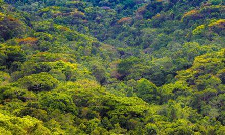 O que é Ecoturismo e como aproveitar um dia em meio a Natureza