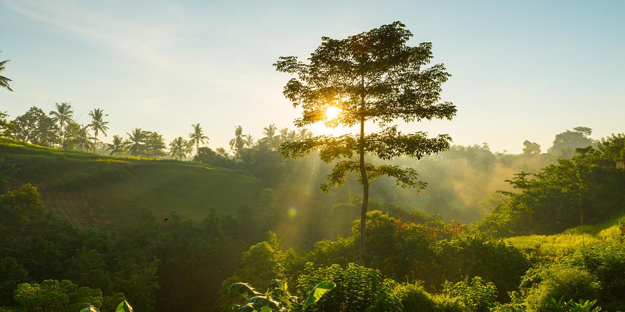 Turismo sustentável: conheça as vantagens de escolher esse estilo de viagem